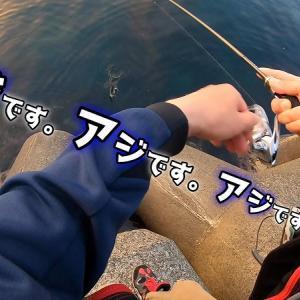 漁港からジグ単でアジの数釣り!アジング始めるなら今でしょ!