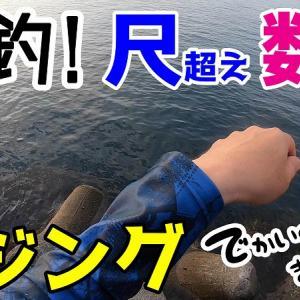 【ジグ単アジング】驚愕の連発!最大35センチ