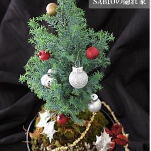 苔玉でミニクリスマスツリー