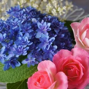 青いプリンセスシャーロット(紫陽花)