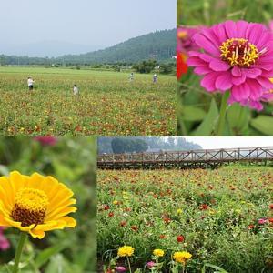 山中湖花の都公園 & 富士山