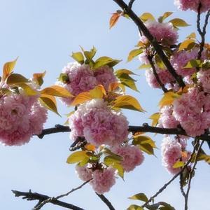 春の花めぐり