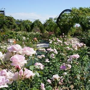 万博記念公園 平和のバラ園
