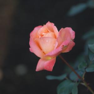 成人の日のお花 & 始める そして、続ける秘訣と