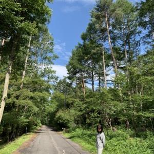 木洩れ日の森の散歩路
