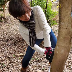 今年も木の伐採のお手伝い♪たくさん切れて楽しい〜(爆笑)