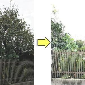 個人邸敷地内にあります柿の木を根元より伐根