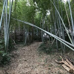 個人邸敷地内つる除去と草刈り、指定庭木剪定、伐採ご依頼