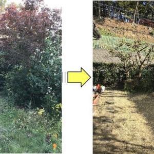 年齢とともにお庭の手入れが難しくなってしまったお庭の剪定作業と芝刈りご依頼