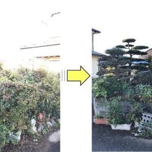 個人邸お庭がつるに覆われ光りがあたらなくなった低木に光りを