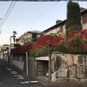 紅葉ドウダンの垣根がきれいな個人邸剪定作業