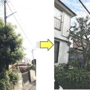 1年で枝が伸びてしまったヤマモモの剪定作業