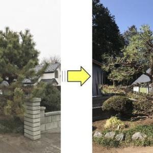 5年以上手入れをしていなく樹形が乱れた松の剪定作業