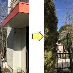 個人邸玄関脇の桃の木剪定作業