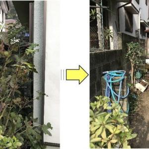 庭木の枝と草で通路が覆われ家の裏側に行くことができなくなった個人邸枝落としと草むしり作業