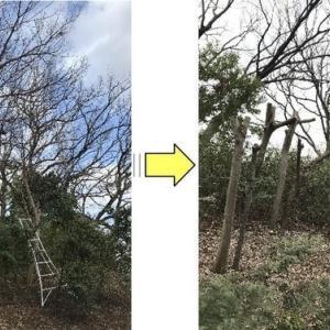 大きく育った雑木を背丈くらいまで伐採
