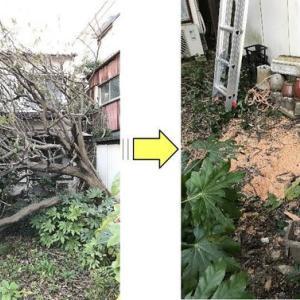個人的敷地内に倒木してしまったびわの木伐採作業