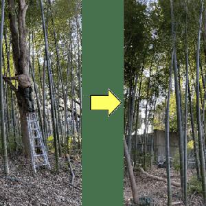 お寺竹やぶ内植木の長~い枝の枝おろし作業