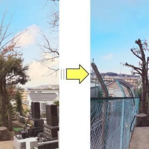 お寺敷地内枝が伸びつるが絡まっている植木枝おろしとつる除去作業