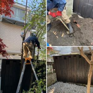 個人邸お庭の柿の木伐採伐根