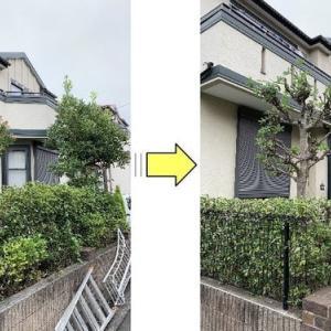 背の高くなった庭木を低くサッパリして欲しいと剪定ご依頼
