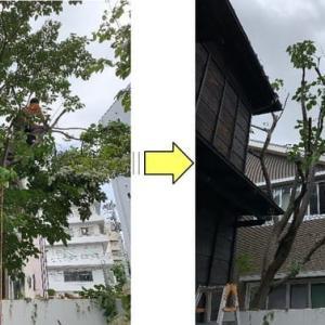 お隣の敷地に枝がはみ出してしまった植木の枝おろし作業