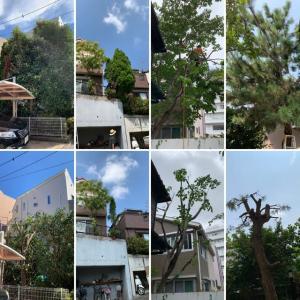 台風被害にあうまえに植木の枝おろしや伐採台風対策しておきましょう