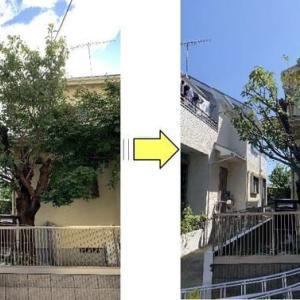 個人邸敷地内に大きく育っている桜の木の枝がお隣の敷地に