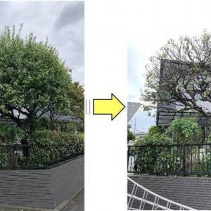 梅の木が大きくなり過ぎご自身では手に負えなくなったと剪定ご依頼