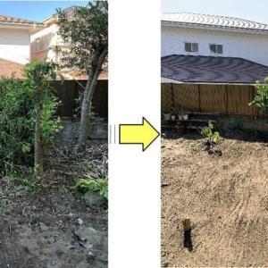 伐根と切り落とされた枝の処理