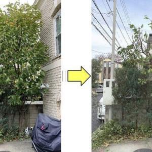 うっそうとしてしまい枝がお隣の敷地にも伸びてしまった植木の枝おろし作業ご依頼