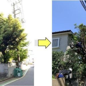敷地内植木が電線を巻き込み大きく育ち近隣の方々にご迷惑をおかけしていると枝おろし作業ご依頼