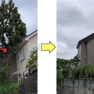 敷地内の背の高くなった樹木や太く長く伸びた枝の台風強風対策