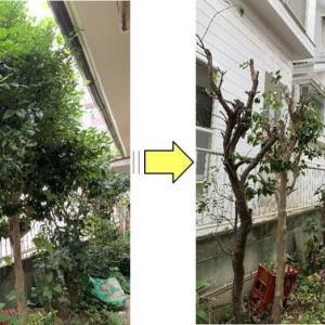 お隣との境界側の庭木剪定作業