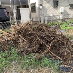竹のはびこる敷地内の竹の根の除去は厄介