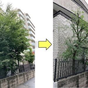 道路に枝がはみ出してしまい近隣の方々にご迷惑をかけてしまっているとモミジの剪定作業ご依頼