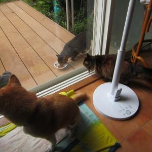 台風の中の外猫は?
