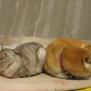 よく寝るシニア3匹