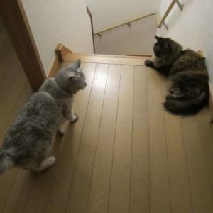 寝る前は階段上で待機