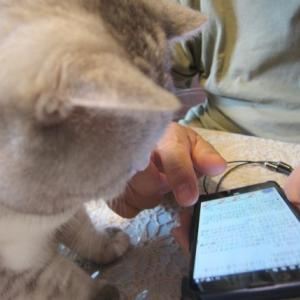 猫もスマホでゲーム