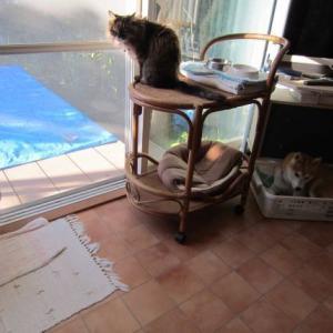 今日も籠の猫