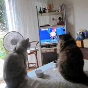 猫も車いすテニス観戦