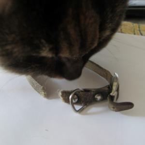 切れたかりんの首輪