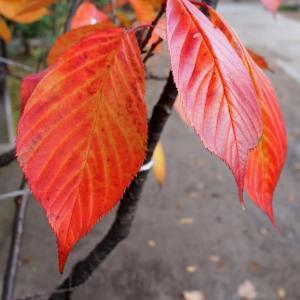 紅葉もラストスパート