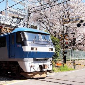 北方貨物線と桜