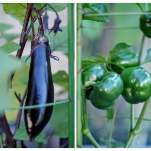 少し長いめの茄子