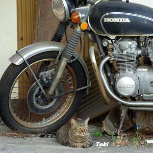 CB500の守り猫
