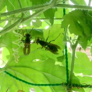 ハチの巣駆除 その2