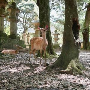 奈良公園で散歩