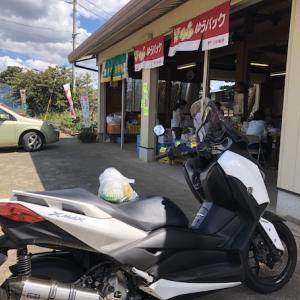 【モトブログ】幻の梨を買ってきたゾ